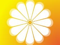 Blume in der Sonne. Stockfoto