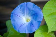 Blume der violetten Farbe auf dem natürlichen Hintergrund Stockbilder