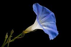 Blume der violetten Farbe auf dem natürlichen Hintergrund Lizenzfreies Stockbild