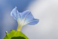 Blume der violetten Farbe auf dem natürlichen Hintergrund Stockfoto