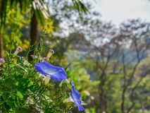 Blume der violetten Farbe auf dem natürlichen Hintergrund Lizenzfreie Stockbilder