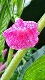 Blume der violetten Farbe auf dem natürlichen Hintergrund Stockbild
