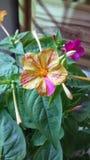 Blume der violetten Farbe auf dem natürlichen Hintergrund Stockfotografie