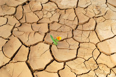 Blume in der Wüste Stockbild