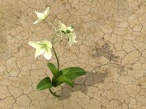 Blume in der Wüste Stockbilder