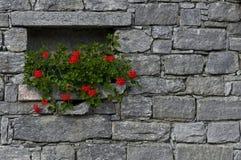 Blume in der Wand Stockfotos