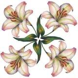 Blume der weißen Lilie, Farbbleistift, Illustration Lizenzfreies Stockfoto