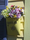 Blume in der Zinntasche auf Haus Stockbilder