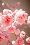 Blume des Abschminktuchs Lizenzfreie Stockfotos