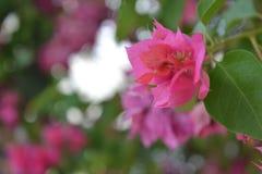 Blume des Bodens Lizenzfreie Stockbilder
