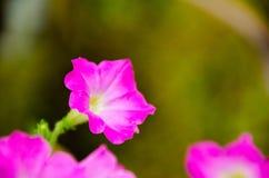 Blume des formalen Gartens Stockfoto