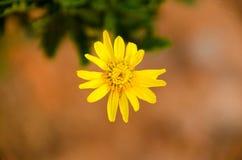 Blume des formalen Gartens Stockfotografie