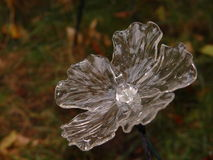 Blume des Glases Lizenzfreies Stockfoto