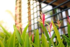 Blume des Graslands Lizenzfreie Stockfotografie