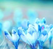Blume des Krokusses Stockfoto