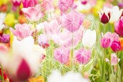 Blume des Lebens als Symbol des neuen Zeitalters Lizenzfreie Stockbilder