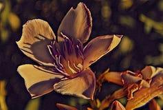 Blume des Morgens stockfoto