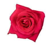 Blume des Rosas stieg Stockbilder
