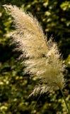 Blume des Stocks Stockbilder