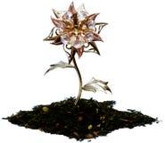 Blume des Tees Stockfotografie