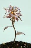 Blume des Tees Stockfotos