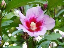 Blume, die auf einem Busch blüht lizenzfreies stockbild