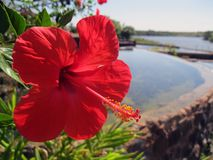 Blume, die den Fluss übersieht. Stockfotos