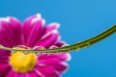 Blume, die in den Wassertropfen widerspiegelt stockfotografie