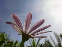 Blume, die für das Sonnenlicht erreicht Stockfotos
