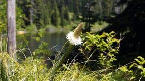 Blume durch den See Lizenzfreies Stockfoto