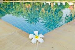 Blume durch Pool mit der Reflexion Stockfoto