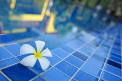 Blume durch Pool mit der Reflexion Stockfotos
