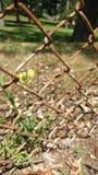 Blume durch Zaun Lizenzfreies Stockbild