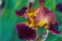 Blume in einem grünen Park Stockfotografie