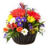 Blume in einem Korb. Lizenzfreie Stockbilder