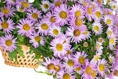 Blume in einem Korb Stockbilder