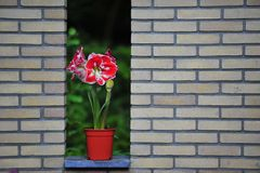 Blume in einem Potenziometer Stockfoto