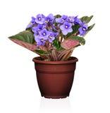 Blume in einem Potenziometer Stockfotos