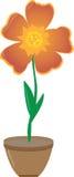 Blume in einem Potenziometer Stockfotografie
