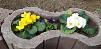 Blume in einem Potenziometer lizenzfreie stockfotografie