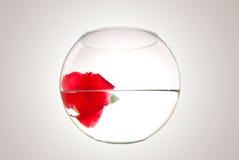 Blume in einem runder Vase gefüllten Wasser Lizenzfreie Stockfotografie