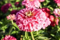 Blume in einem schönen Garten Stockbild