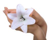 Blume in einer Hand lizenzfreie stockbilder