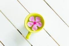 Blume in einer Schale Stockbild