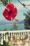 Blume eines roten Hibiscus gegen das Meer Stockfoto