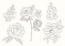 Blume eingestellt: in hohem Grade ausführliche Hand gezeichnet Stockfotografie