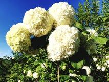 Blume-f?rmiger Ball der gro?en Runde erregt die Aufmerksamkeit von Passanten lizenzfreie stockfotografie
