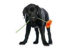 Blume für Sie Stockbilder