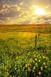Blume, Feld, Zaun Stockfotografie