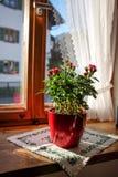 Blume am Fenster Stockbilder